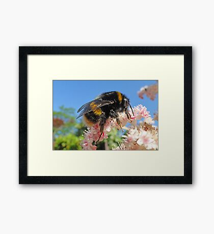 Bee - A Buzzing Thing Framed Print