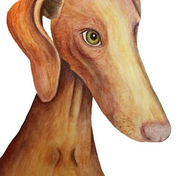 Vizsla painting by rayemond