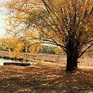 The Stonelea Creek 2 by Niamh Scally