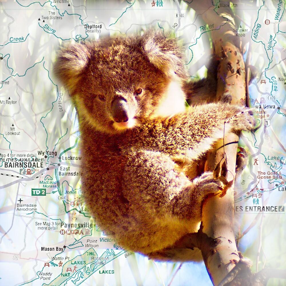 Young Koala on Raymond Island by Yukondick