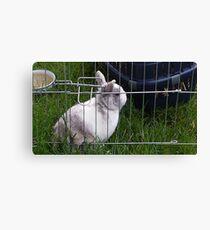 animal, bunny, rabbit, cute Canvas Print