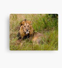 Great lion Canvas Print