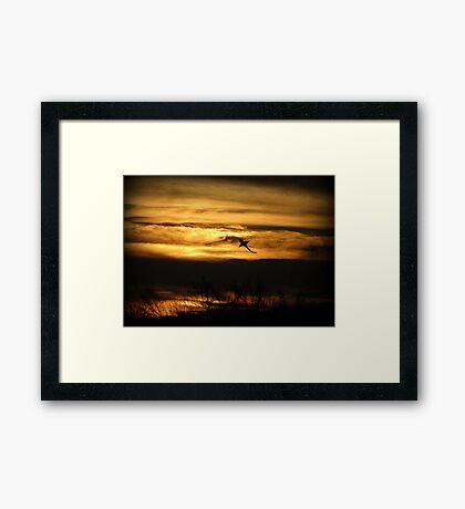 Sunset Sea Shark Framed Print