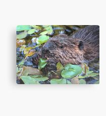 Mr. Nibbles Canvas Print