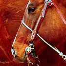 Equine Lines #2 by Susan  Bergstrom