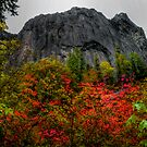 Wolf Rock Fall Colors by Charles & Patricia   Harkins ~ Picture Oregon