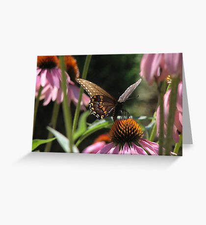 Butterfly Summer Greeting Card