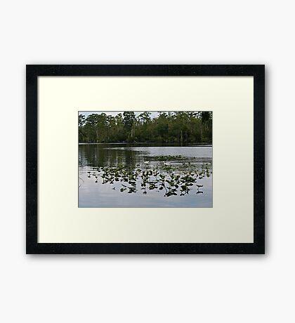 Ducks in the River Framed Print