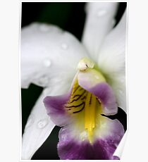 Through an orchid darkly Poster