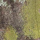 Stone & Lichen - iPhone Case by HoskingInd