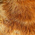 Ginger Cat Fur - iphone Case by HoskingInd