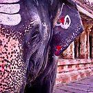 Lakshmi the Elephant by KerryPurnell