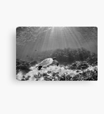 Coral bay moment  Canvas Print