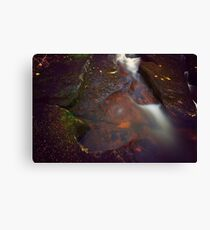 Moss Leaves and Water Canvas Print