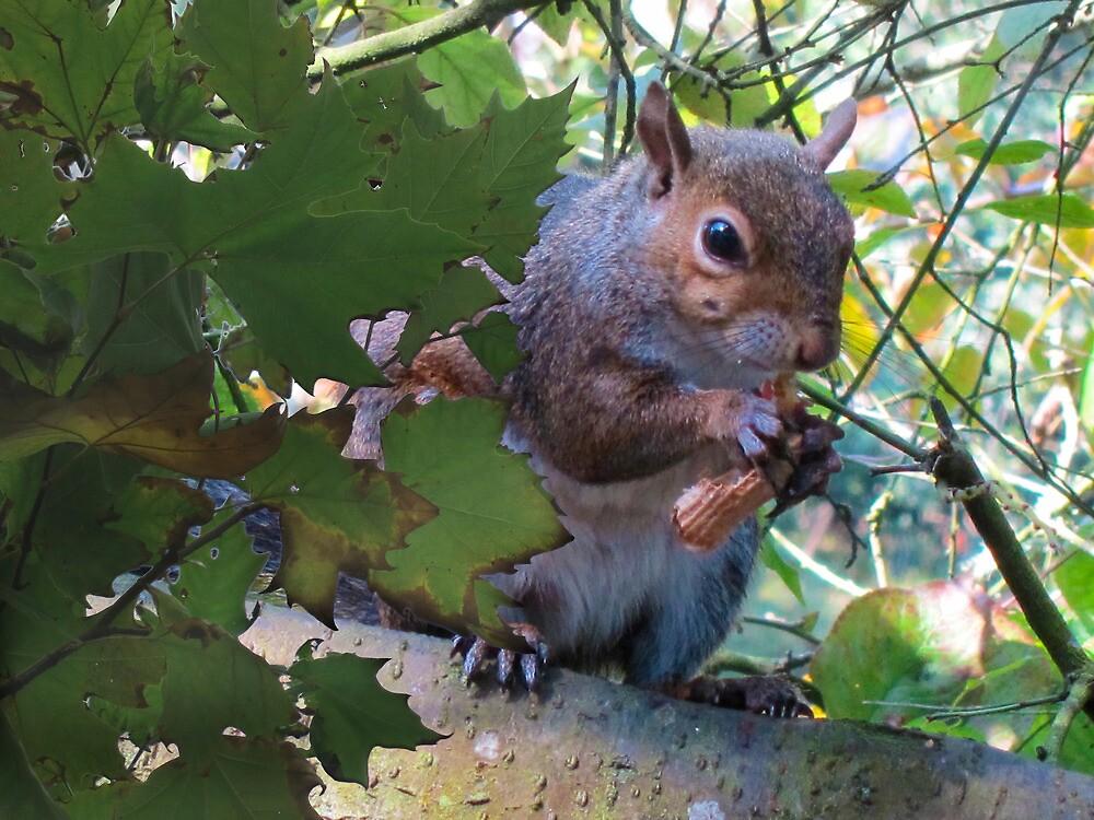Squirrel   by David Denny