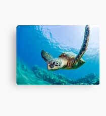 Green Sea Turtle over Reef Canvas Print
