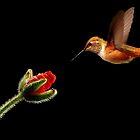 HUMMINGBIRD IN FLIGHT~ by RoseMarie747