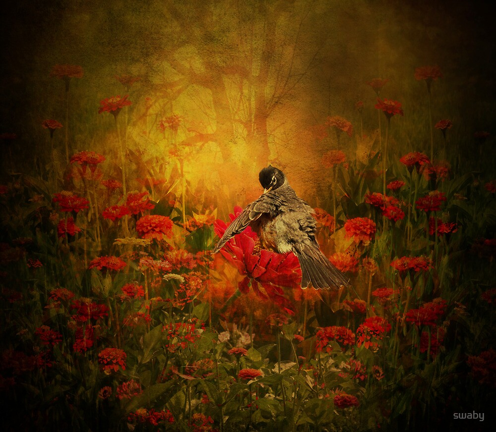 Where the Zinnia Grow by swaby