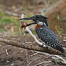 Grubs up.... by CraigSev