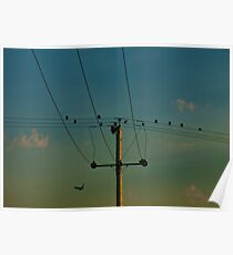 Birds on a Wire in the Sunset Poster