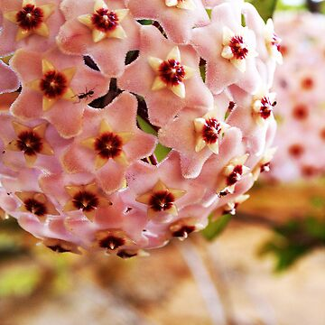 Flower Ball by WilMorris