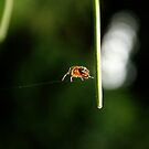 On a Spider's Web by WilMorris
