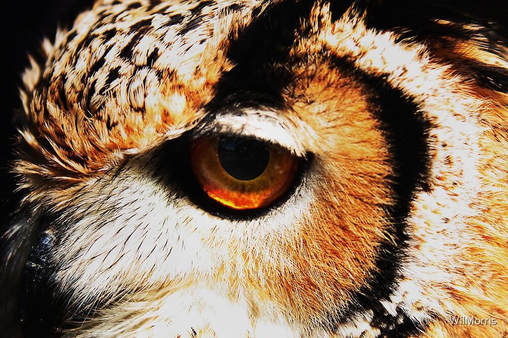 Owl's Eye by WilMorris