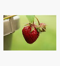 Strawberry Photographic Print