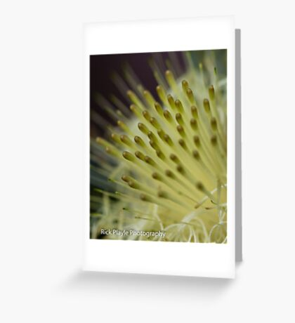 Dryandra Flower Greeting Card