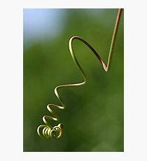 Spring Shaped Passion Flower Tendril Photographic Print
