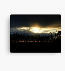 Long Island Reed Sunset Canvas Print
