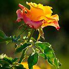 Raw Beauty by George Parapadakis ARPS (monocotylidono)