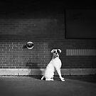 Alert Dog by printscapes