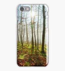 Beauty of winter forest with moss, sunny day, nature concept iPhone Case/Skin