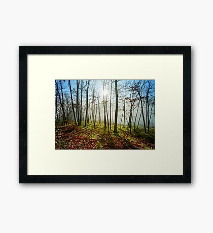Beauty of winter forest with moss, sunny day, nature concept Framed Print