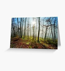 Beauty of winter forest with moss, sunny day, nature concept Greeting Card