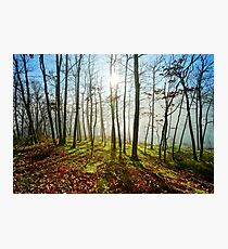 Beauty of winter forest with moss, sunny day, nature concept Photographic Print