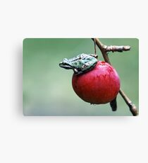 Pacific Tree Frog On A Crab Apple Canvas Print