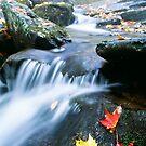 Shenandoah National Park by printscapes