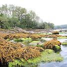 Algae by jroch