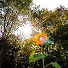 THE SUNflower by jroch