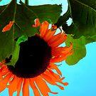 The Sun...Flower by jroch