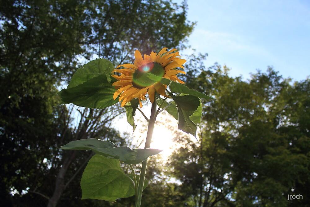 Flower Power by jroch