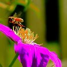Worker Bee by jroch