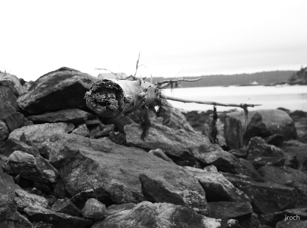 Sea Tree by jroch