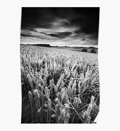 Harvest Whisper BW Poster