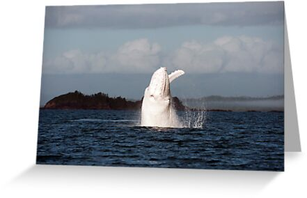 The Big White Whale by Jenny Dean