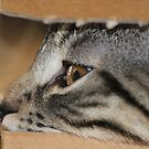 Cat in the Box by karina5