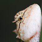 Lizard eye, Thailand by Emma M Birdsey