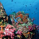 Diver and coral reef by Emma M Birdsey